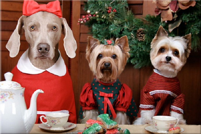 Dog Chatter Holiday Tea Time