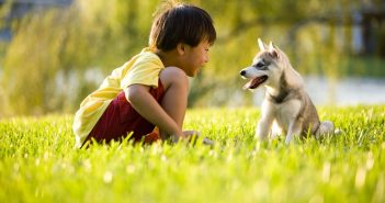 child playing with puppy in grass