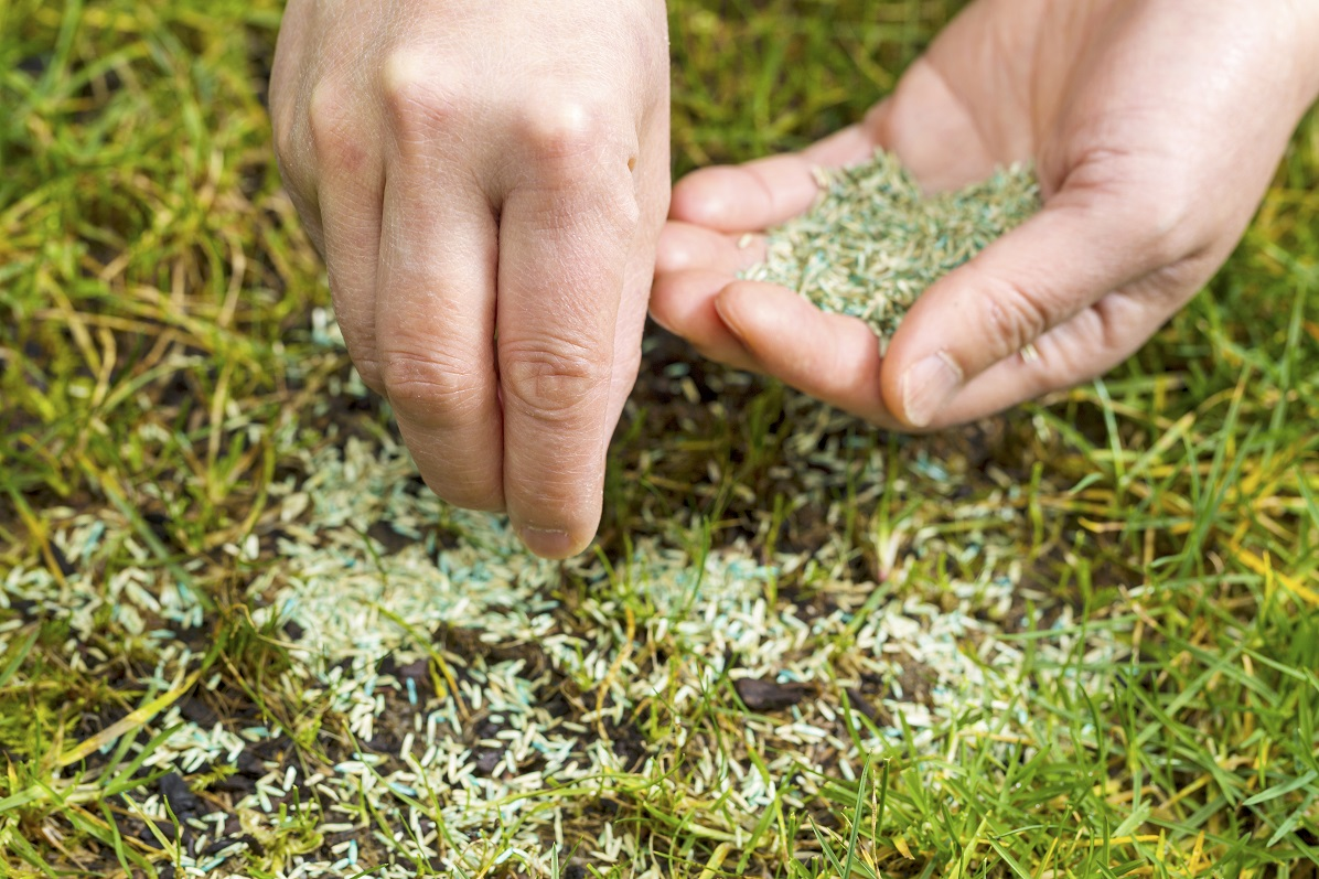 planting grass see in bare spot