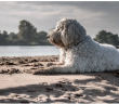 How To Keep Your Pet Pooch On Top Form