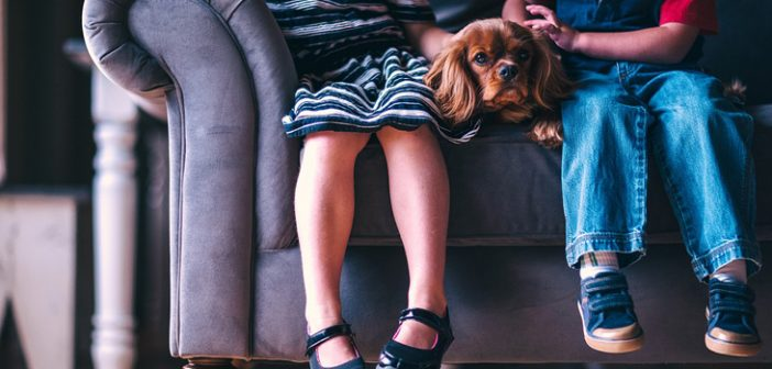 How to Protect Your Sofa from Energetic Kids
